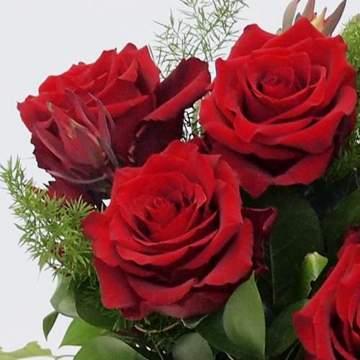 dia de la mare roses vermelles