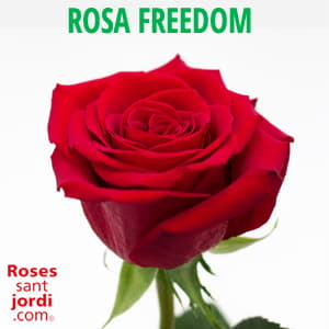 Rosa Freedom