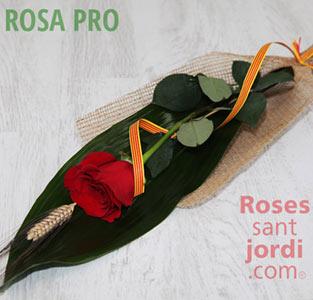 majorista rosas freedom pro