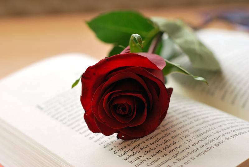 Rosas San Jordi