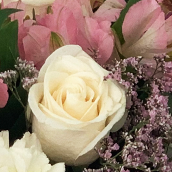 Rosa de Sant Jordi online