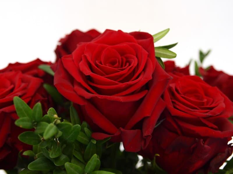 Ramo de 24 Rosas Rojas VIP