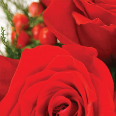 Envía Rosas Rojas (6)